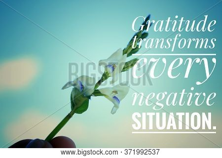 Inspirational Quote - Gratitude Transforms Every Negative Situation. With Flower Plant Background Ag