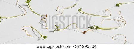 Young Sprouts Of Cressalate On A White Background. Fresh Organic Plant Vegetables. Green Watercress.