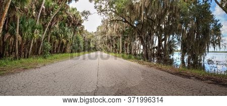 Spanish  Moss Hangs From Trees That Line The Road