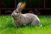 bunny eating grass from bright green pasture poster