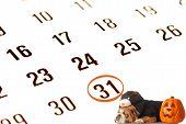 english bulldog wearing black cat costume on october calendar poster