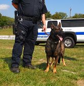 A K-9 unit police dog stands calmly next next to an armed law officer. poster