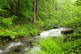 Forest stream Nature background river Nature background jungle Nature background brook Nature background spring fresh green deciduous trees water Nature background foliage leaves waterfall Nature background Nature background woods Nature background.