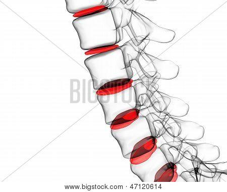 X-ray Human Spine