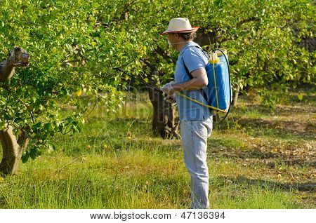 Spraying A Lemon Field