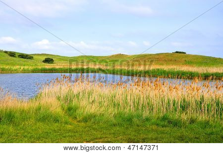 Lake reeds and hills against the sky