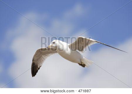 Gull&sky2