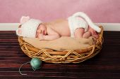 13 day old newborn baby girl wearing a white crocheted kitten costume and sleeping on her tummy in a basket. poster