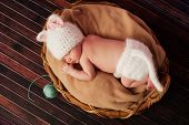 Overhead view of a 13 day old newborn baby girl wearing a white crocheted kitten costume and sleeping on her tummy in a basket. poster