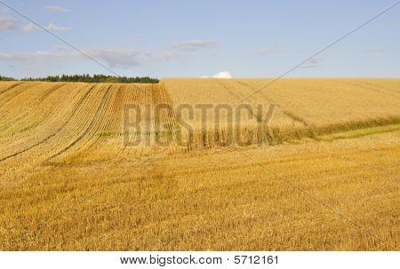 Swedish rural farmland