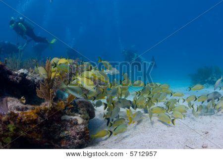 Beautiful reef fish