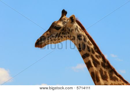 giraffe on sky