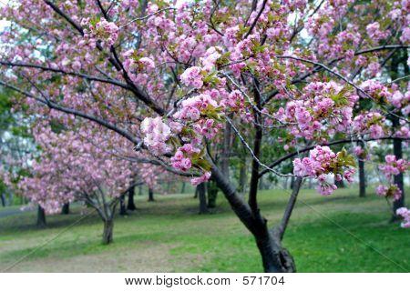 Blossom Flowers In Spring Season