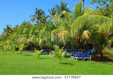 Deck Chairs Under Palm Trees