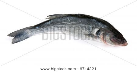 Raw fish isolated on a white background poster