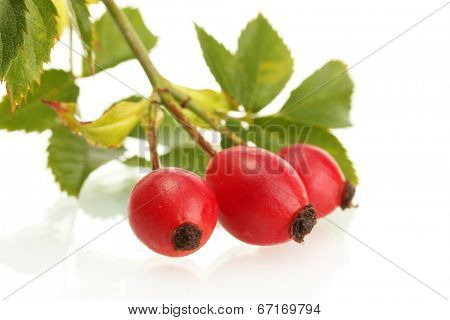 ripe hip roses on branch with leaves, isolated on white poster