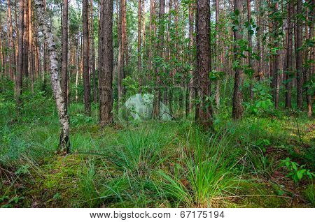 Hidden In Forest Pitched Tent - Example Of Stealth Camping