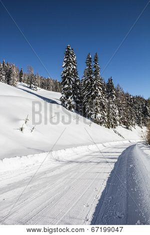 Winter Scenery With Trees Snow And Blue Sky