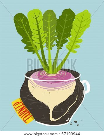 Growing Turnip with Green Leafy Top in Container