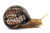 """Snail with """"Calm Down"""" message on its shell isolated poster"""