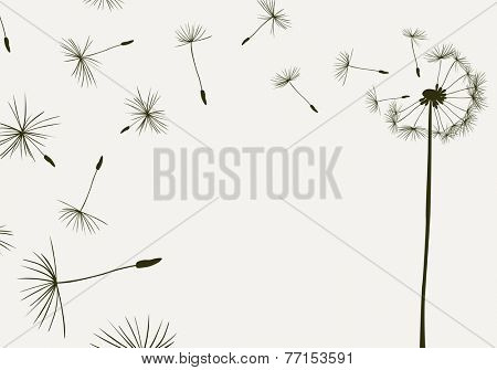 dandelions flying in the wind