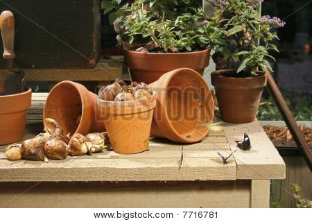 Stock Image Of Garden Life Inside Of Potting Shed