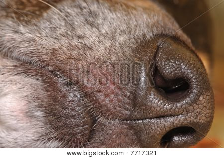 Dog's mouth & snout