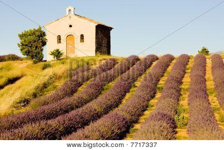 chapel with lavender field Plateau de Valensole Provence France