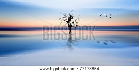 Concept Fine Art Image Of Tree And Birds In Still Waters