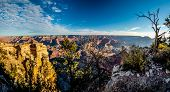 Very high resolution panoramic view of the colorful Grand Canyon in early morning.  With dead tree. poster