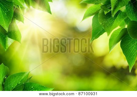 Nature Background Framed By Green Leaves