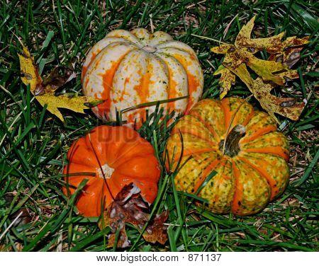 Pumpkins/Squash