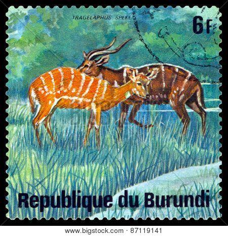 Vintage  Postage Stamp. Sitatungas. Animals Burundi.