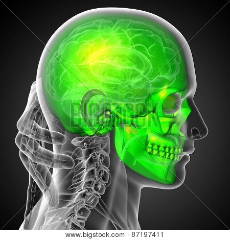 3D Render Medical Illustration Of The Skull