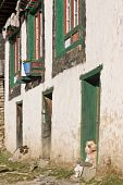 Tibetan style house in the village of Namche Bazar in the Nepal Himalayas. Dog peering out of the door. poster