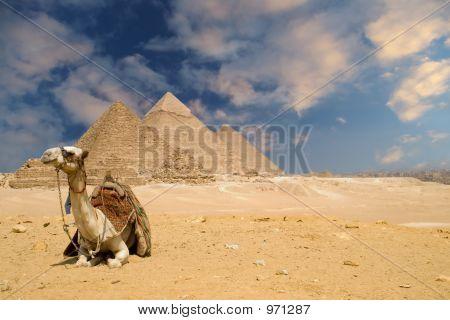 The Pyramids Camel