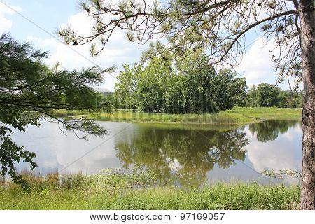 Summer Time trees and lake at Morton Arboretum in Lisle, Illinois