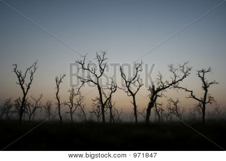 dead trees silhoutte at sunrise - south africa poster