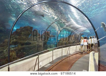Tourists Looking At Fishes At The Aquarium