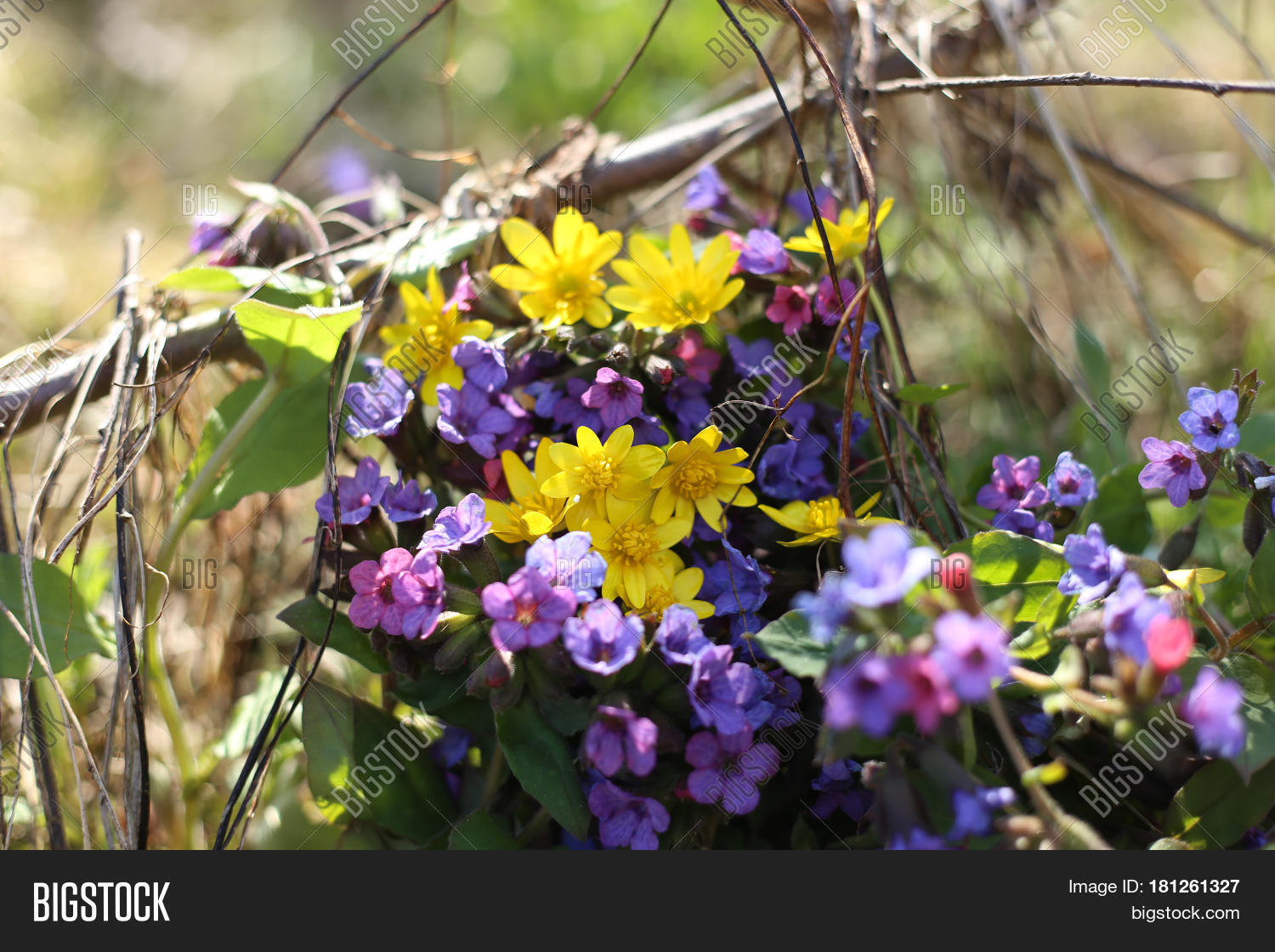 Wild Forest Flowers Image Photo Free Trial Bigstock