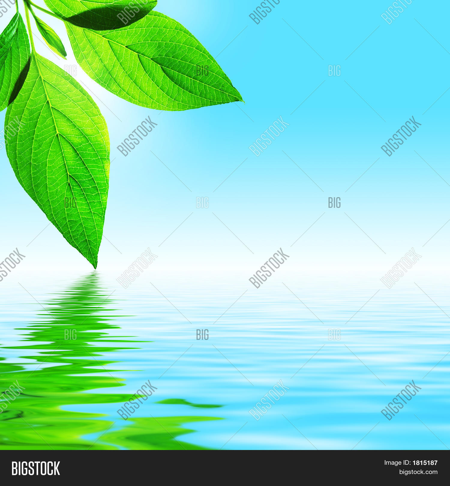 Fresh Leaf, Blue Sky Image & Photo (Free Trial) | Bigstock