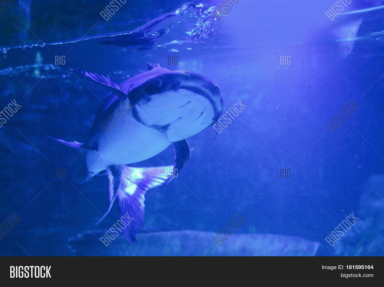 Exotic Freshwater Fish Image & Photo (Free Trial)   Bigstock