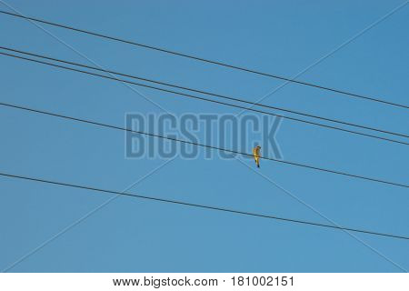 A little bird sitting on the wire of the power line