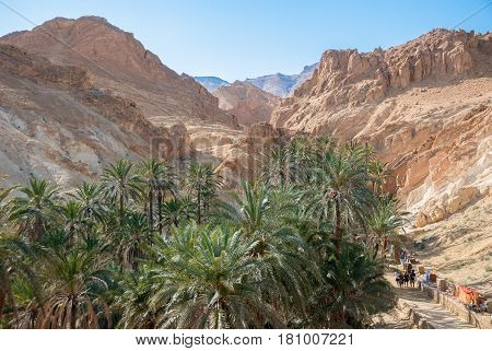 Canyon with palm trees down in the mountain desert