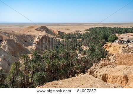 Deep canyon with palm trees down in the mountain desert
