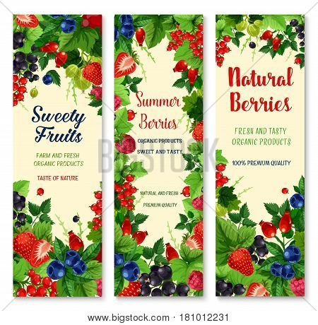 Berries vector banners. Farm or garden harvest of of blueberry and black currant and cranberry, fresh raspberry and gooseberry. Ripe fruits of strawberry, juicy briar and wild cowberry or redcurrant