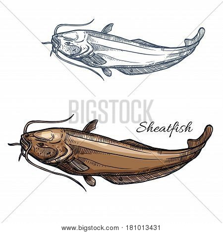 Sheatfish sketch vector fish icon. Isolated freshwater lake or catfish or burbot fish species. Isolated symbol for seafood restaurant sign or emblem, fishing club or fishery market
