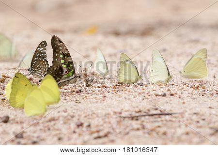 A pretty butterfly on a sandy soil background