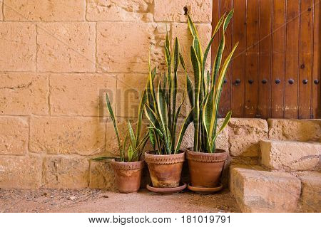 Green potted plants In front of the building entrance