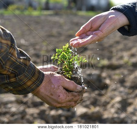 Farmers watering green young plant. Symbol of spring and new life. Sunny day